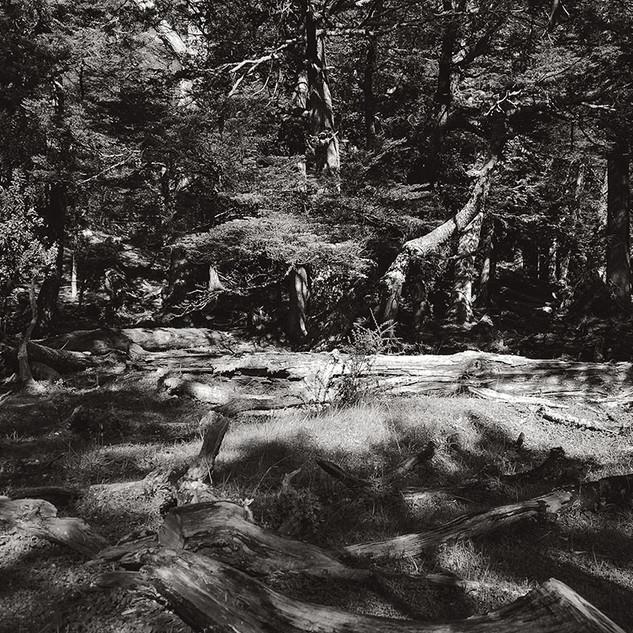 Uncertain Nature Bosque