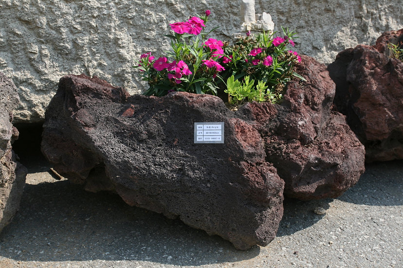 현무암 화산석 화분