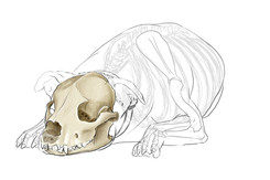 Bone study
