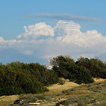 vegetation-1316679_960_720.jpg