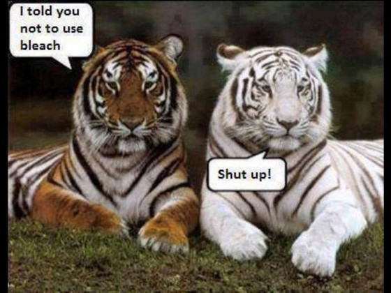 😝haha. I always did like the White Tigers 🐯