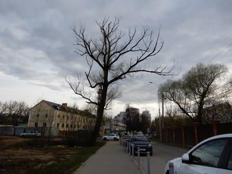 Обращение по полузасохшему дереву на Фитаревской