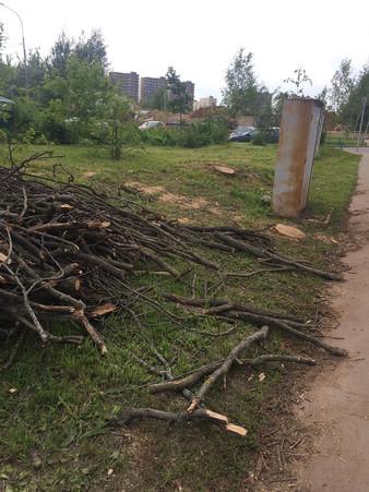 Уничтожено еще два дерева