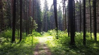 Экология Новой Москвы: прогулка по территории поселений Сосенское и Московский