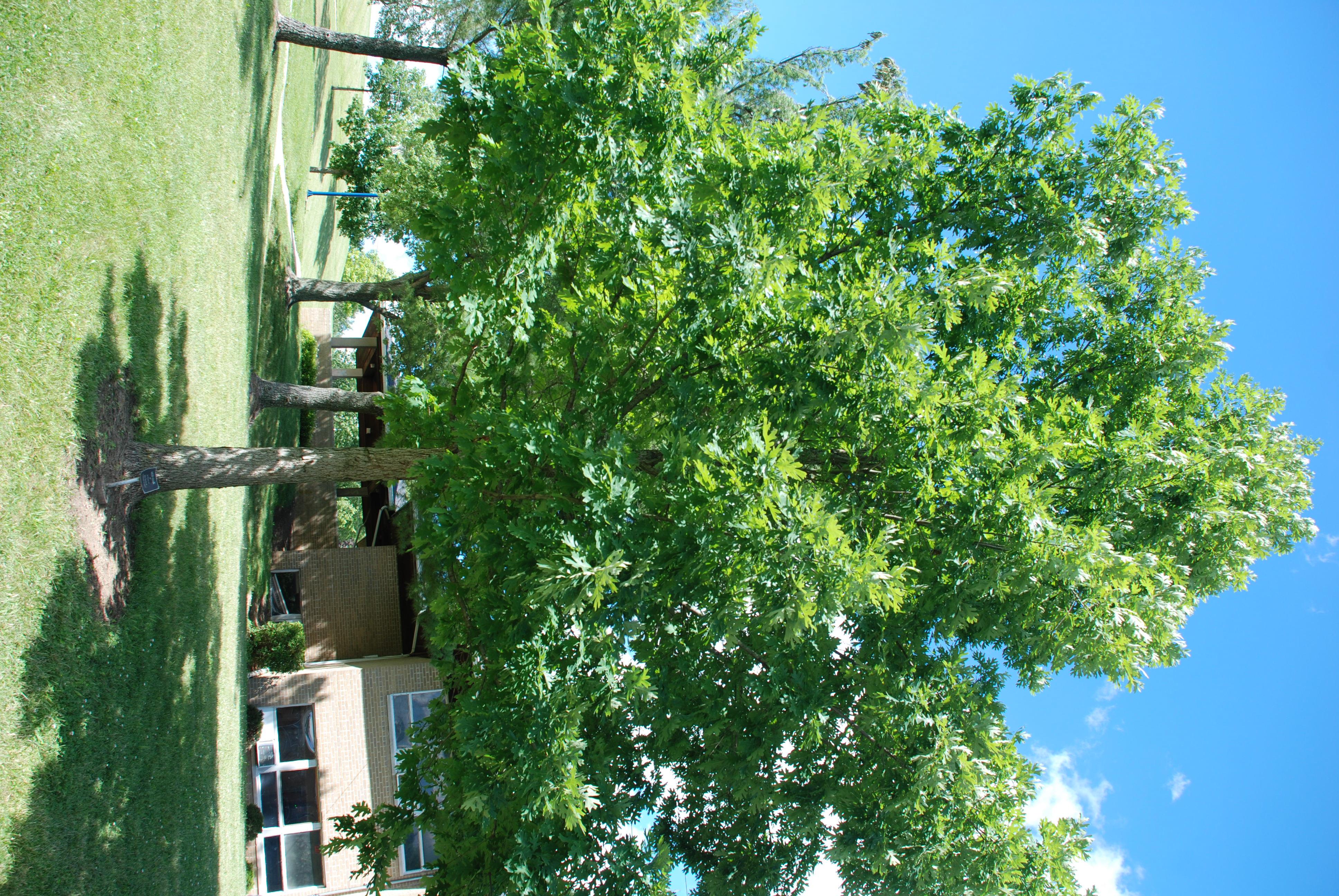 apt trees