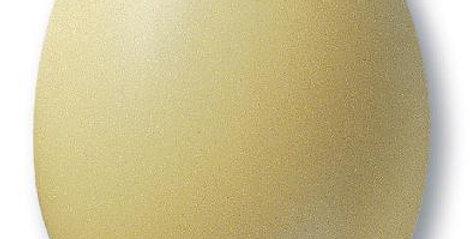 305 (TC 7805) Vanille