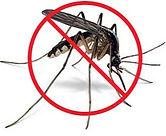 no_mosquito1.jpg