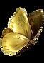 motýľ.png