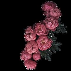 kvet2.png