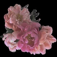 kvet1.png