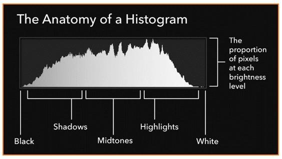 histograms anatomy.jpg