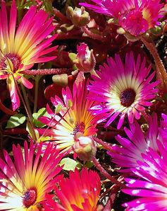 purple yellow DSCN9326.jpg