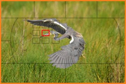 AF Area Mode Dynamic 9 Point.jpg