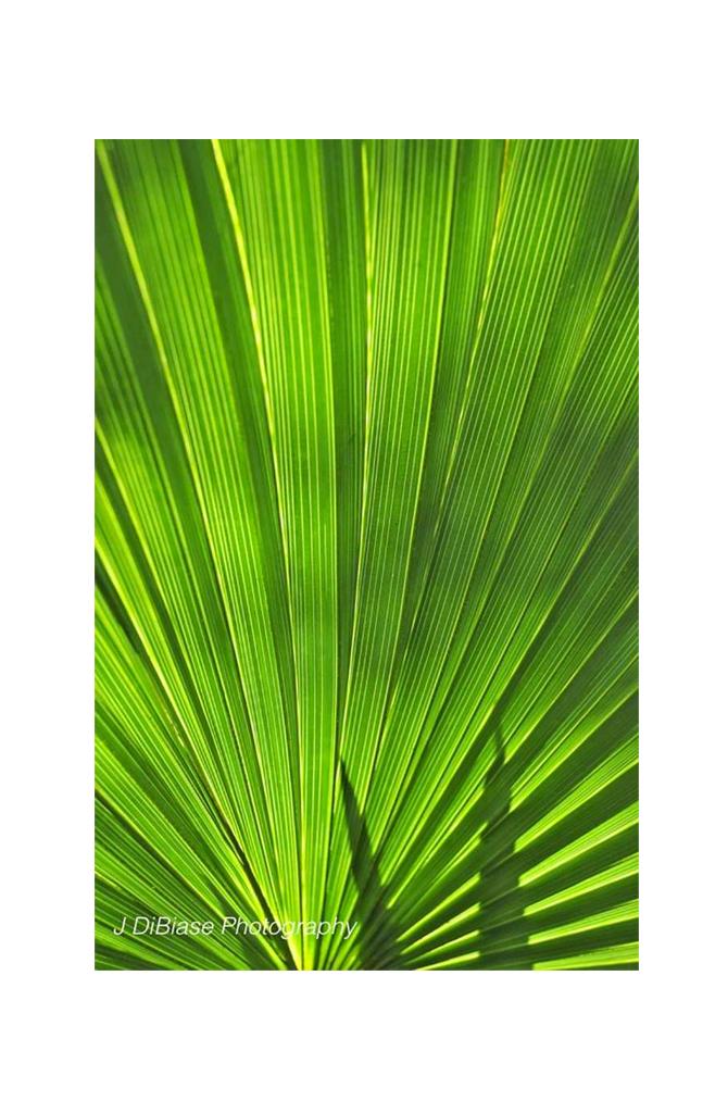 Green Radiance v6