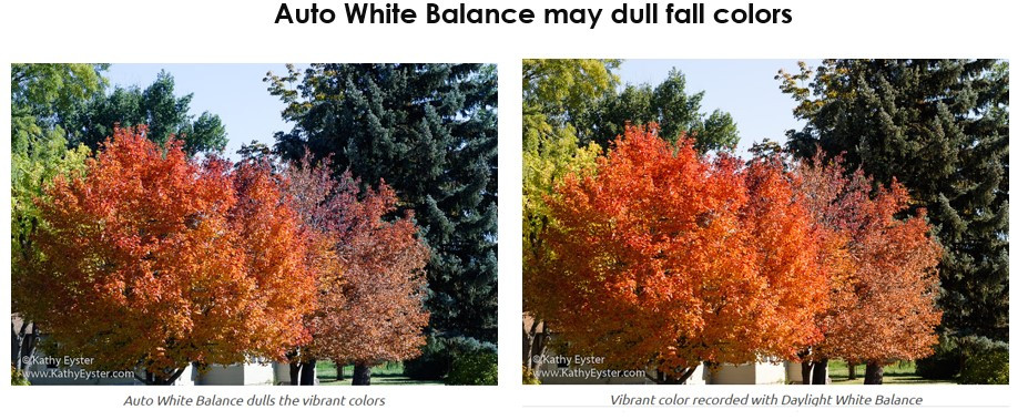 Auto White Balance can dull colors