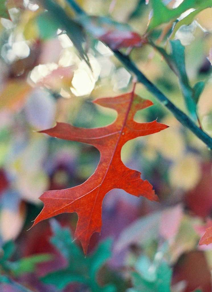 Autumn Light by Julie DiBiase