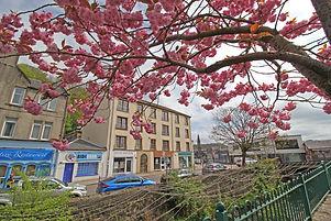 Cherry blossom across the river. Stevenson House apartments, Oban.