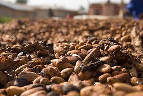 cocoa-2427493_1920.jpg