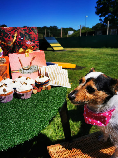 Parties 4 Pooches!