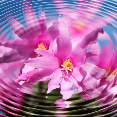 Développer votre savoir intérieur en conscience et avec confiance