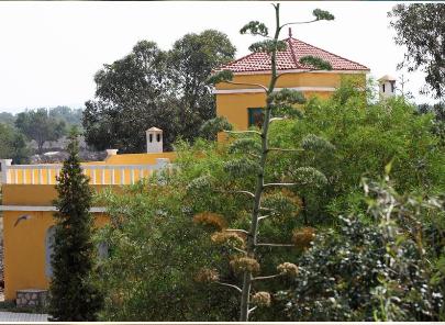 Villa Juba 8