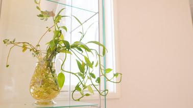 毎回配置が換わる植物も楽しみにしてくださいね