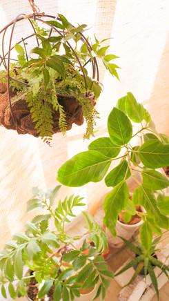 季節や気分によってアトリエの植物たちは変わります