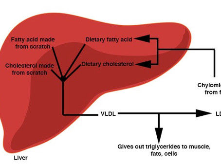 Why LDL Cholesterol May Go Up on a Ketogenic/Carnivore Diet