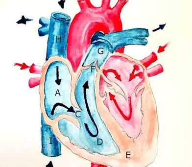 Is the Heart Really a Pump?