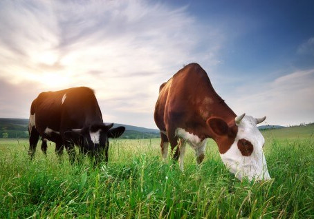 Is a Heart Healthy Animal-Based Diet Environmentally Sustainable?