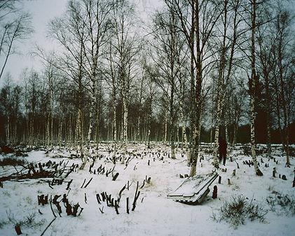 Aino Vaananen-136 2 copy_.jpg