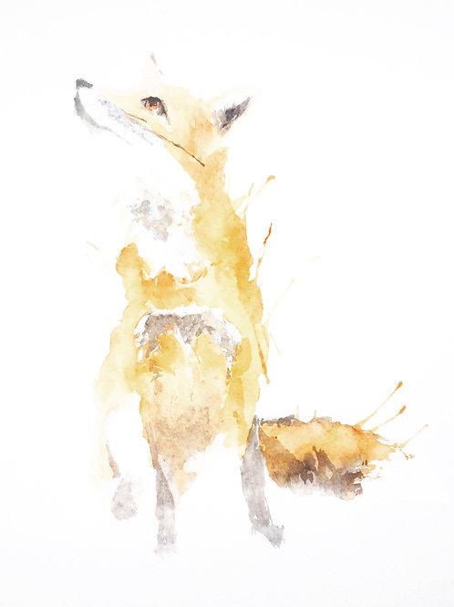 Muted Fox
