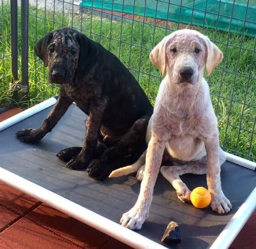 Gisele and Brady.jpg