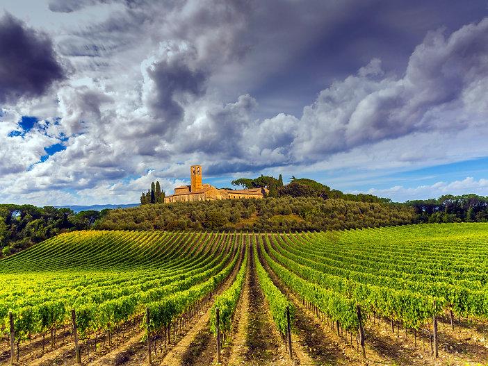 Canva - Tuscany vineyards.jpg