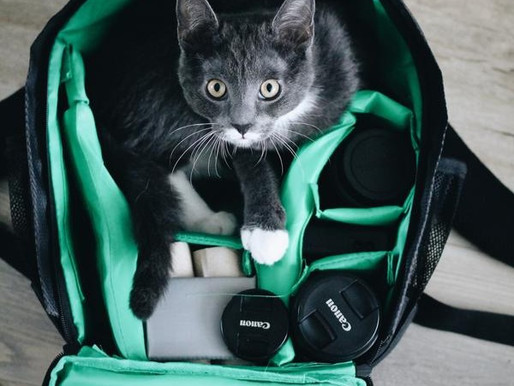 How to Travel by Plane with Your Pets