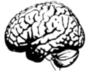 Large picture of cerebral cortex