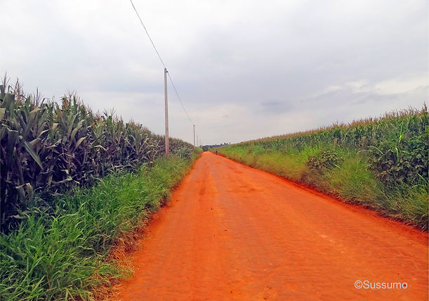 Caminho do Sol, Caminho de Santiago, passeio de bike, plantação de milho