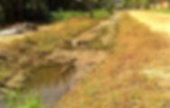 sala verde mata ciliar Ubatuba perequê-açú dia da água
