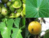 ubatuba frutas vegetais feira agricultura