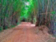 Caminho do Sol, Caminho de Santiago, passeio de bike, mata do pinheiro