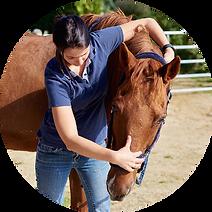 Ostéopathie cheval