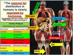 fat-distribution.jpg
