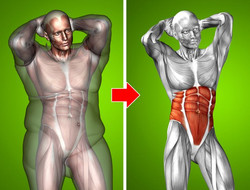 fat-body-image.jpg