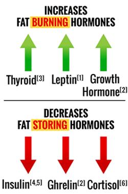 fat-burning-hormones.png