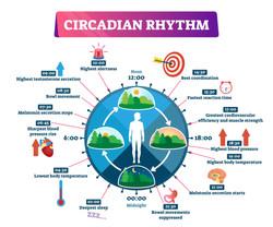 What-is-Circadian-Rhythm .jpg