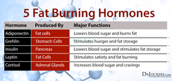 fat-burning-hormonestable.png