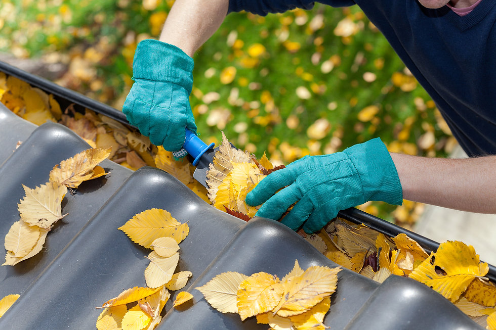 A man taking autumn leaves out of gutters.jpg