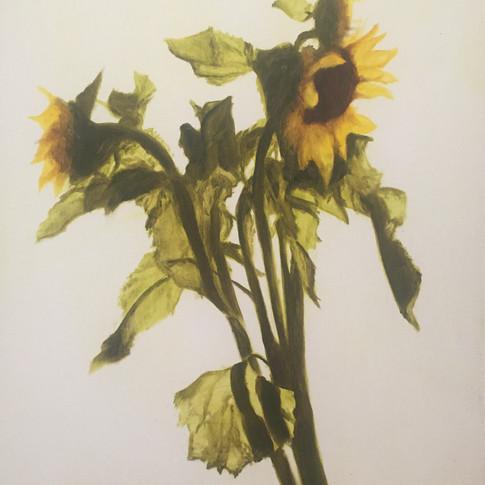 Sunflowers, 2016, oil on aluminium, 50 x 40cm.
