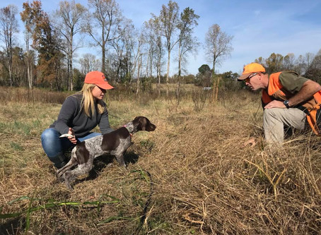 How To Get Started With Your Bird Dog