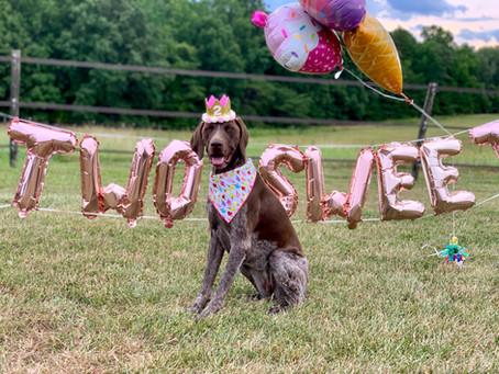 Blitz's 2nd Birthday